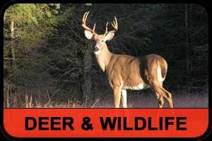 deer_red_black2.fw