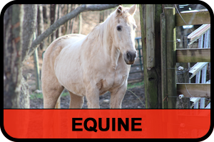 equine_red_black3.fw