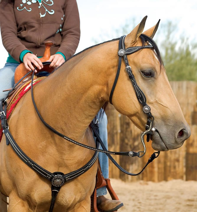 horse tack