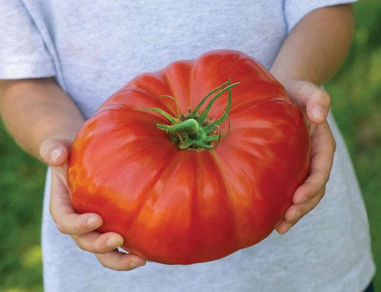 Great Tomato Contest with Cash Prize of $100